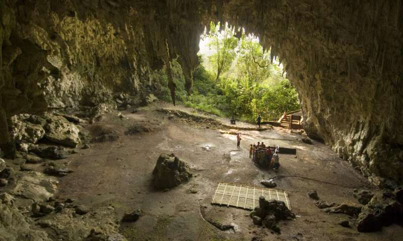 In 2003, an international team of researchers, including those from the University of Wollongong Australia, uncovered the remains of a previously unknown species of small-statured hominins at Liang Bua, a limestone cave on the Indonesian island of Flores. Credit: University of  Wollongong.