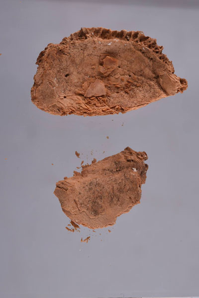 Pieces of the skull found inside the box. Photo Credit: Ahram Online.
