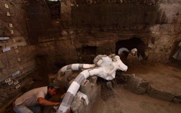 Mexican archeologists work to dig up the ribs, humerus and the vertebrae of a mammoth dated from the Pleistocene period. Photo Credit: AFP/The Telegraph.