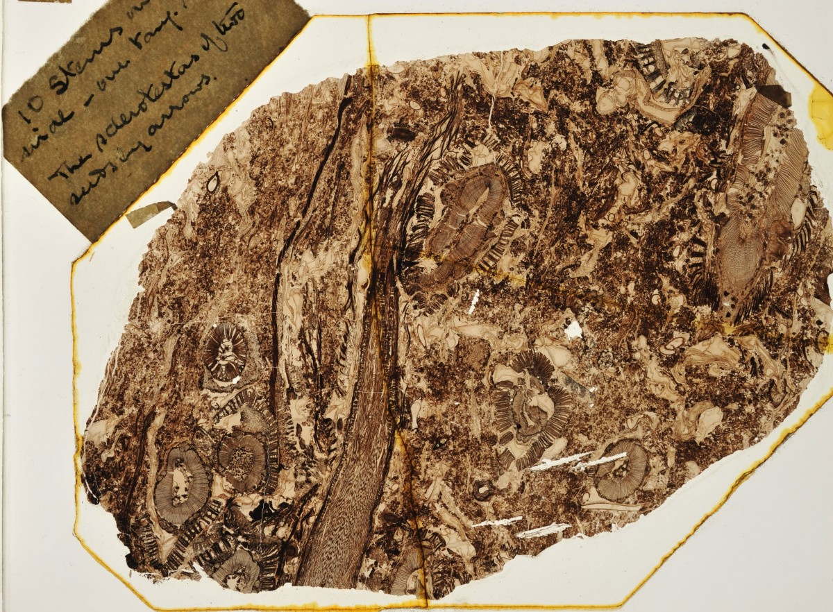 Thin slice of 320-million-year old fossil soil. Photo Credit: John Baker/Department of Plant Sciences University of Oxford.