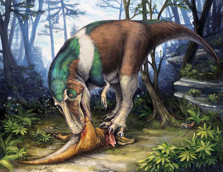 Gorgosaurus using its specialized teeth for feeding on a young Corythosaurus. Image credit: Danielle Default.