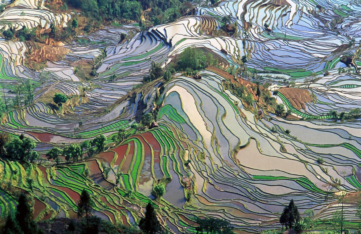Aerial view of rice fields in Yunnan Province, China. Credit:  Jialiang Gao.
