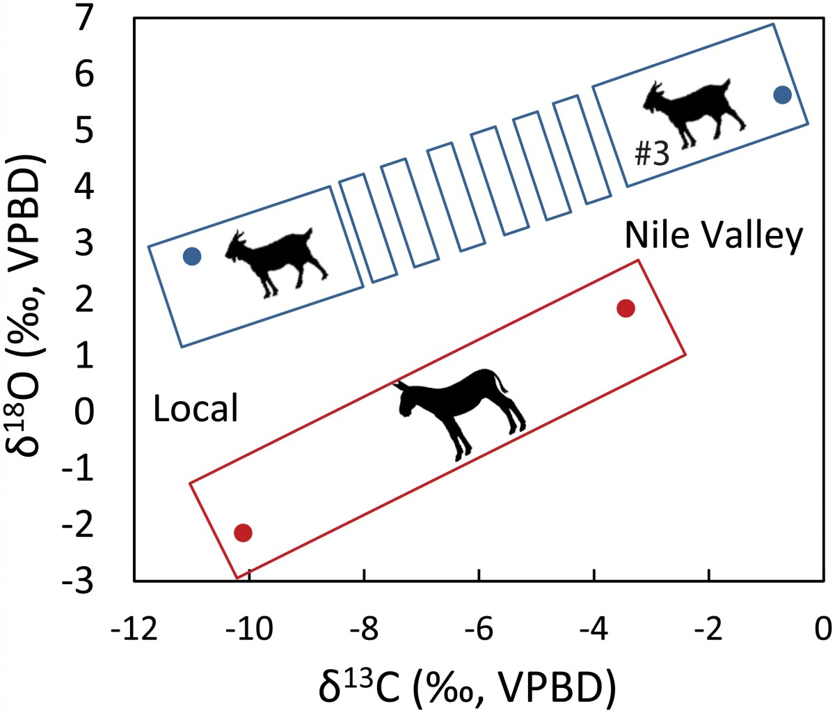 Local vs. Nile valley bivariate plotting of mean intra (ass; red frame) and inter-tooth (ovicaprine; dashed blue frame) δ18O and δ13C values. Image Credit: PLOS One.