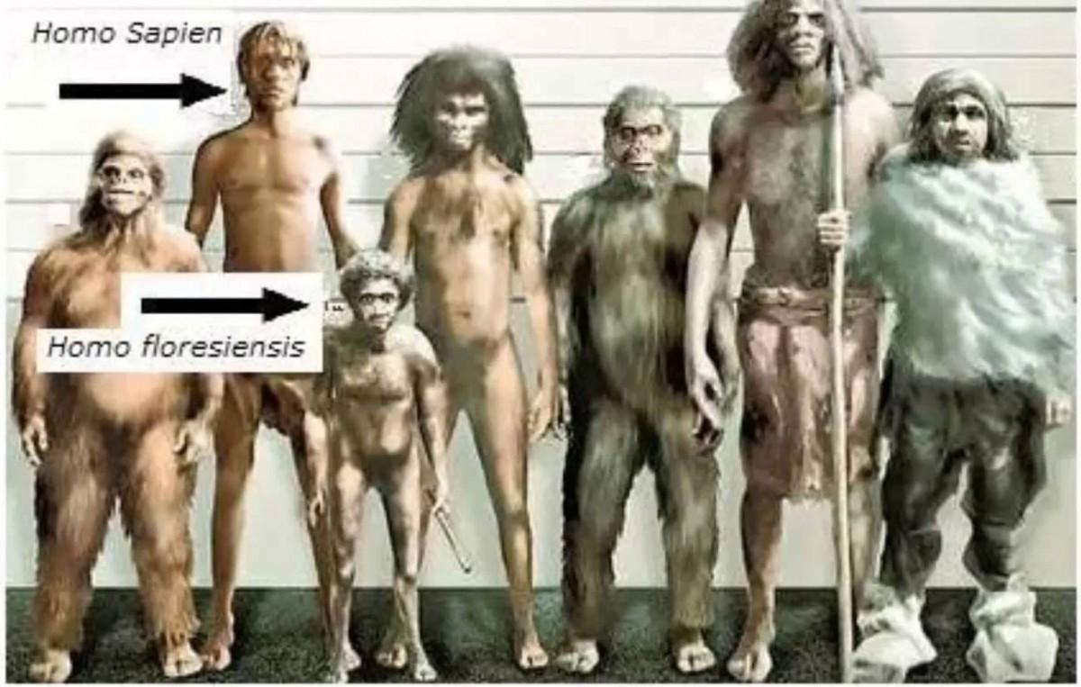 From left to right: Homo habilis, Homo Sapiens, Homo floresiensis, Homo Erectus, Paranthropus boisei, Homo heidelbergensis and Homo neanderthalensis.