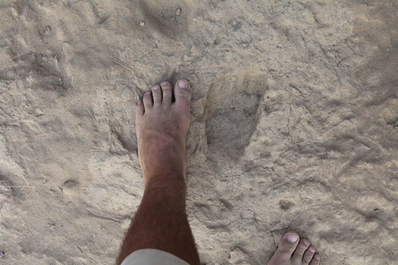 The shapes of the fossil and modern footprints are nearly indistinguishable. © Kevin Hatala