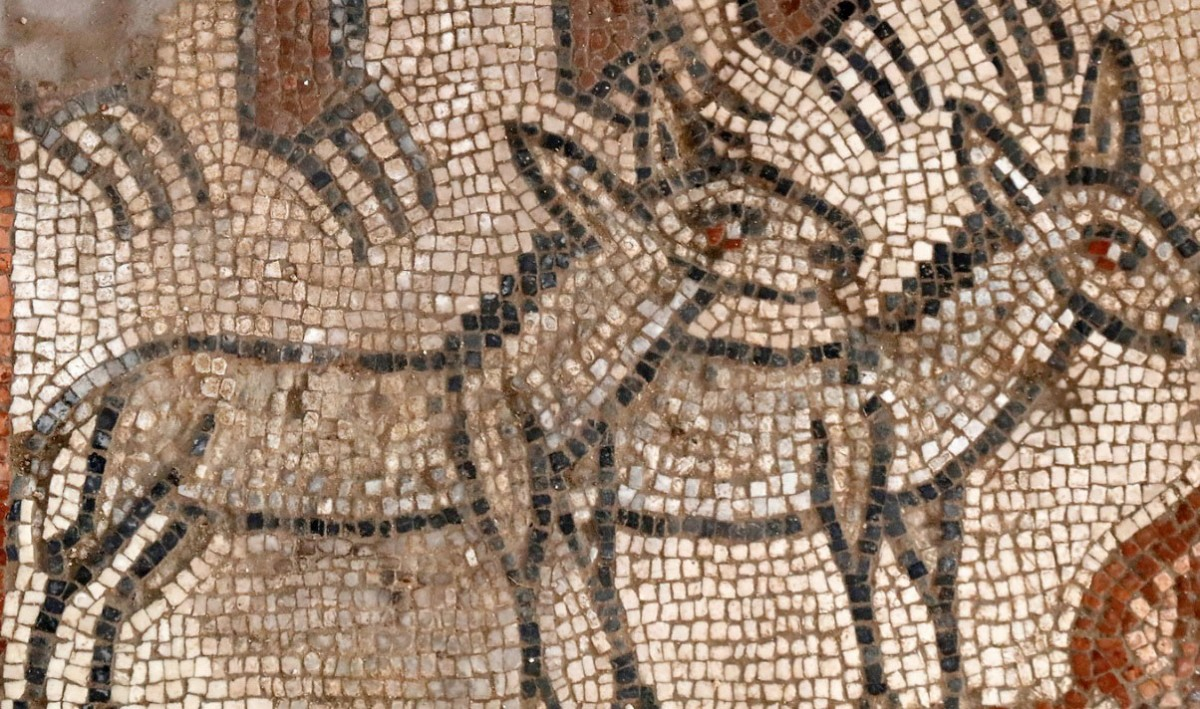 Huqoq mosaic, pair of donkeys in Noah's Ark scene. Photo credit: Jim Hab.