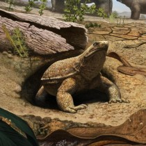 Scientists discover real reason turtles have shells