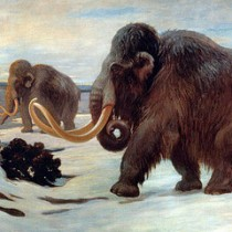 St. Paul Island mammoths most accurately dated 'prehistoric' extinction ever
