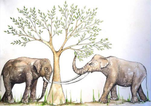 Interpretive illustration of proboscidean feeding ecology in the Late Pleistocene of southern China. Elephas (left) incoporates more graze in its diet; whereas Stegodon (right) is an obligate browser of fresh shoots and leaves. Credit: Image by Nicola Heath