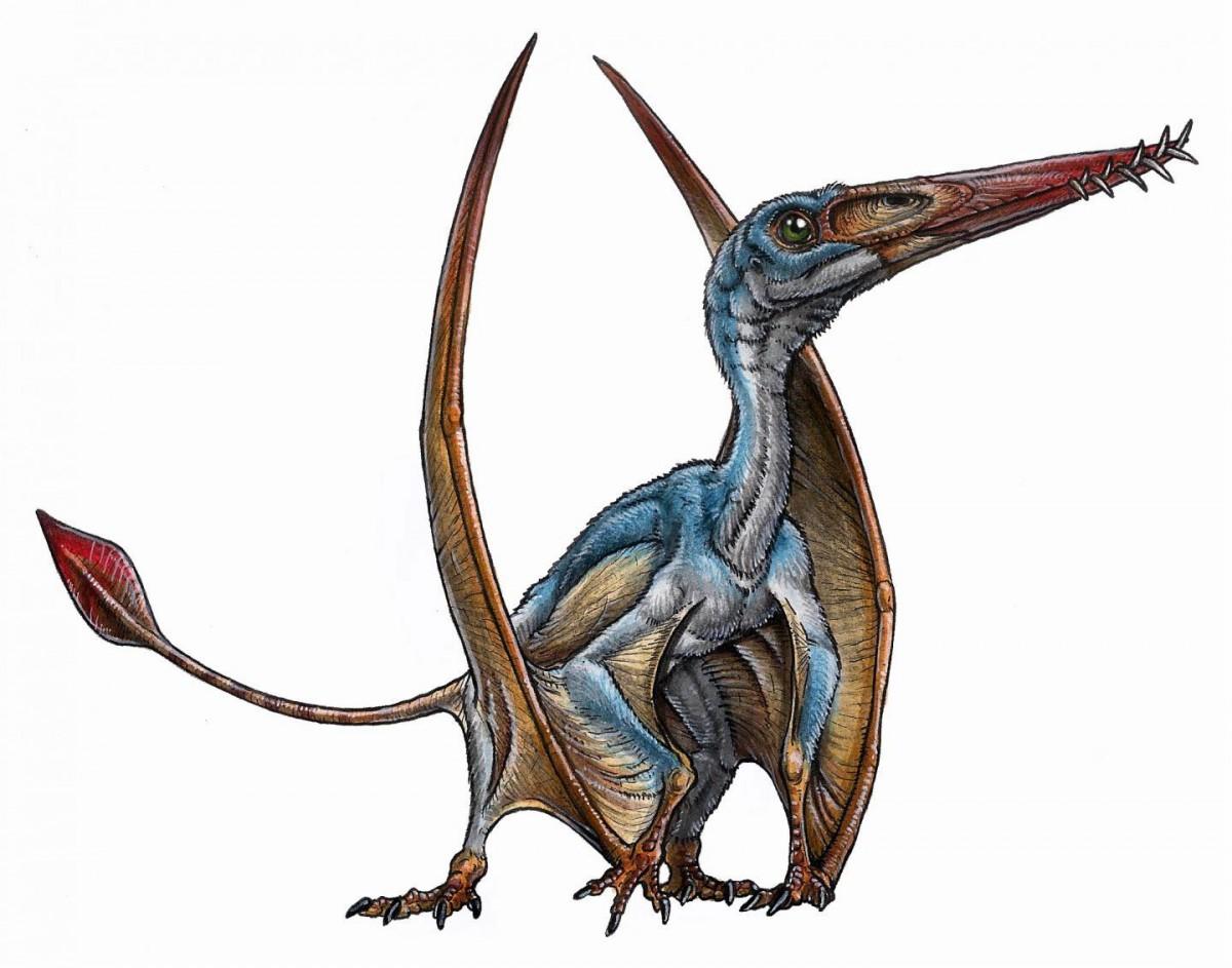 Paleoartist's reconstruction of a pterosaur. Credit: Gabriel Lío