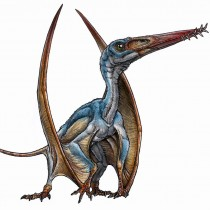 New species of pterosaur discovered in Patagonia