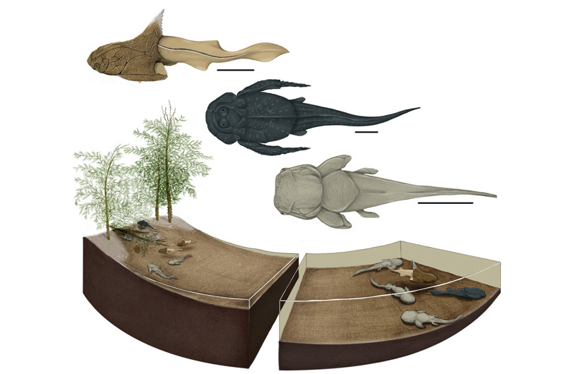An artist's depiction of what the Strud nursery ecosystem may have looked like, including the three different placoderm species discovered at the site. Image by Justine Jacquot-Hameon/PLOS-One.