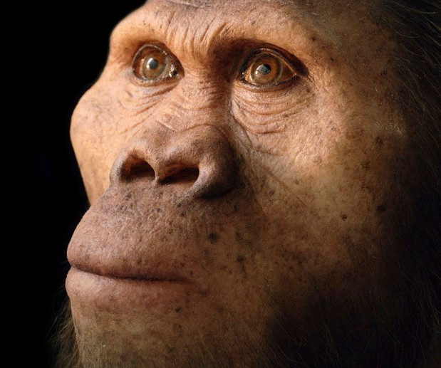 A reconstruction of the Mrs Ples specimen of Australopithecus africanus, an extinct species forming an early part of the human evolutionary tree. Photo Credit: Philippe Plailly/Getty Images/COSMOS.