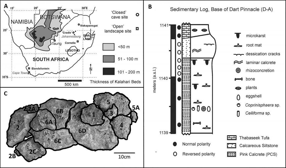 Locality and stratigraphy of the deposits. Photo Credit: Jennifer F. Parker, Philip J. Hopley, Brian F. Kuhn/PLOS ONE.