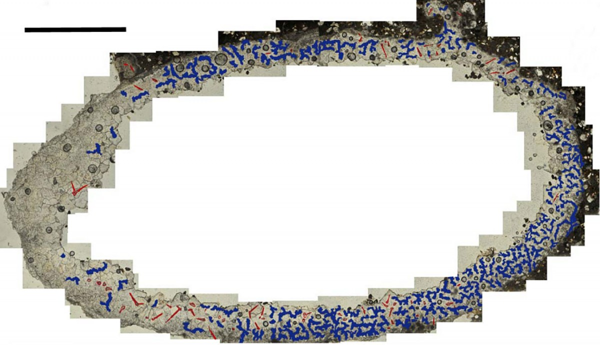 Petrographic microscope image of a thin section of a Cell. The calcitic casts of the trichomes are highlighted in red and the relics of an organic matrix in blue. Photo Credit: Jennifer F. Parker, Philip J. Hopley, Brian F. Kuhn/PLOS ONE.