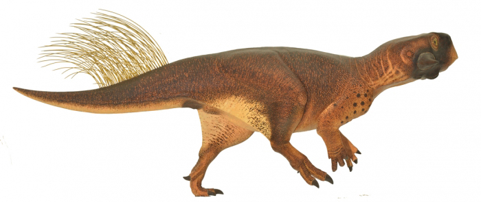Model of the examined dinosaur from the Cretaceous. The long tail bristles and the coloration are clearly visible. © Jakob Vinther/Robert Nicholls