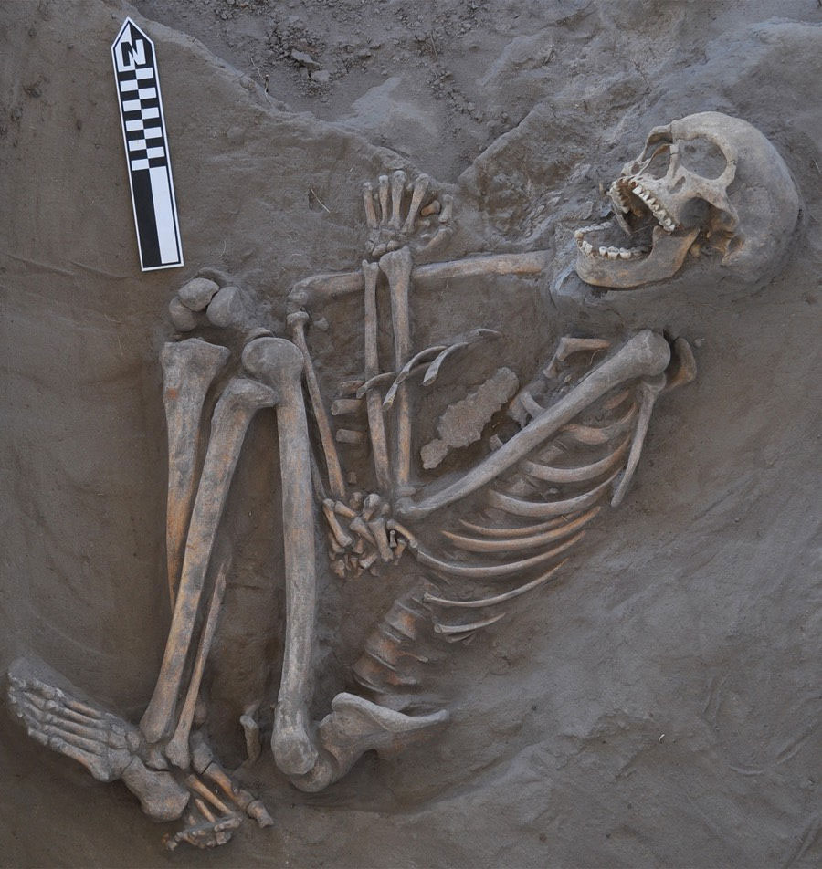 The 800-year-old skeleton now called Kaakutja had a long gash in its skull, likely due to a boomerang attack. Photo Credit: Antiquity Publications Ltd/Live Science.