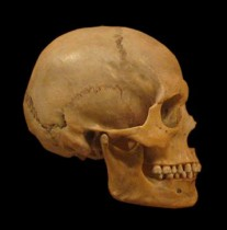 The Fate of Neanderthal Genes