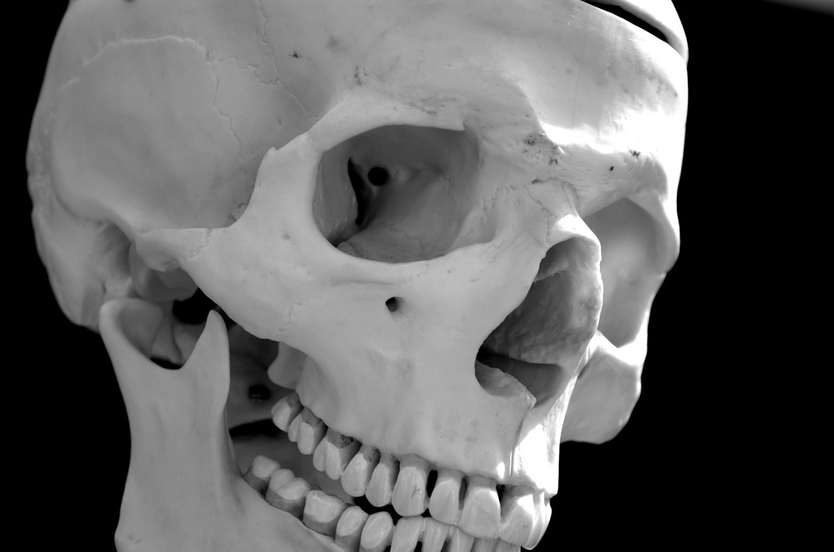 Common descent of human populations is reflected both in their cranial features and their linguistic affiliations over vast geographic distances.