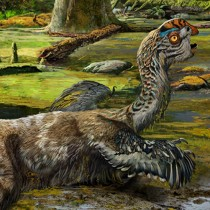 Dinosaur discovery casts light on final flurry of animals' evolution