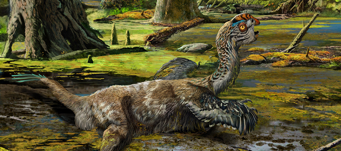 Tongtianlong limosus belongs to a family of feathered dinosaurs called oviraptorosaurs, characterised by having short, toothless heads and sharp beaks.