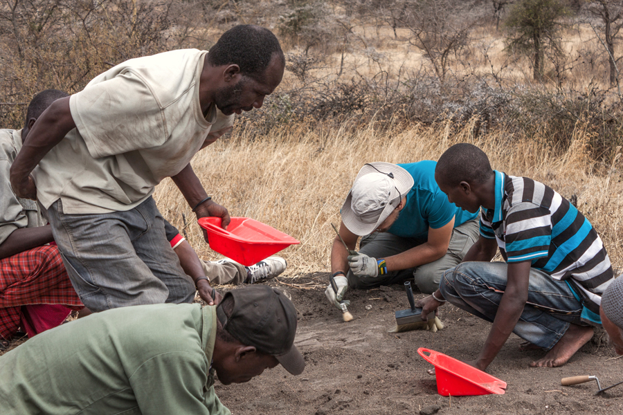 Preliminary digging and cleaning operations at the Laetoli Site. Credit: Università di Pisa.