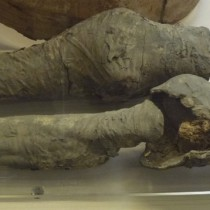 Mummified legs might belong to Queen Nefertari