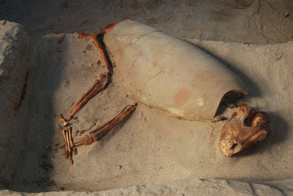 Loving dog burial. Photo Credit: Bartosz Woszick/The History Blog.