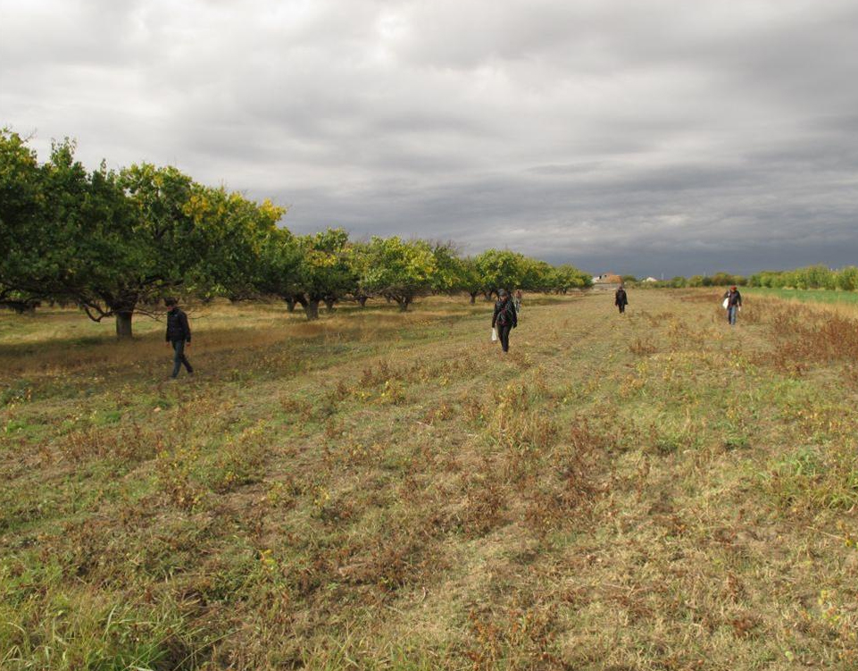 Polish-Armenian team fieldwalking near Pokr Vedi. Photo by R. Karasiewicz-Szczypiorski