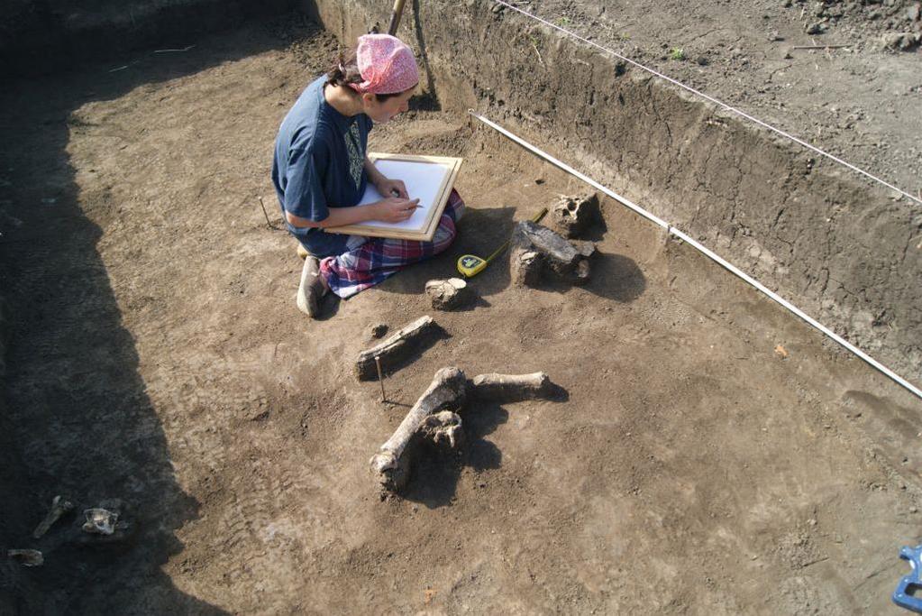 Inna Gaiciuc documents the animal deposit near the