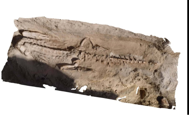 An almost complete crocodile skeleton was found along with sandstone sarcophagi.