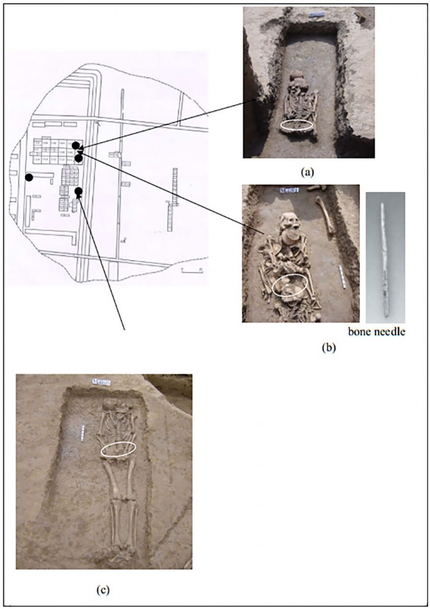 Tombs M436 (a), M451 (b), and M466 (c).  The positions where the relic body soil samples were collected are indicated by the arrows and shown in the separate images. The four black dots indicate the locations where the control samples were collected.