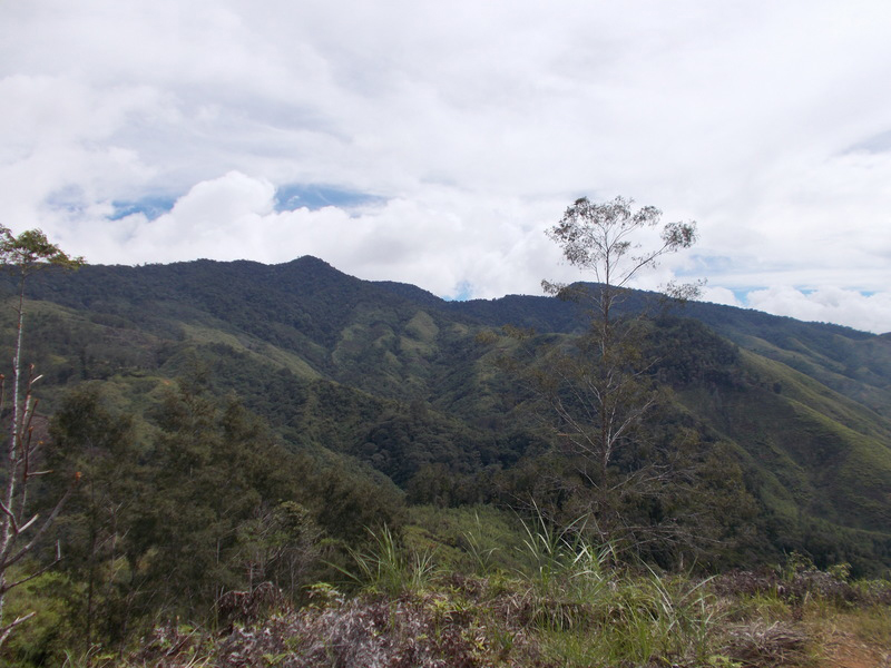 Montane rainforest in the Central Highlands of New Guinea. Credit: Dylan Gaffney and Glenn Summerhayes