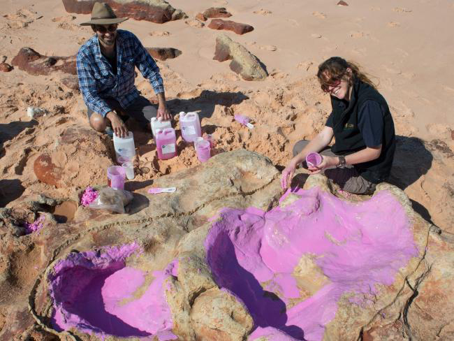 Anthony Romilio and Linda Pollard from the university creating a silicon cast of sauropod tracks in the Lower Cretaceous Broome Sandstone in the Walmadany area of Dampier Peninsula, Western Australia. Picture: University of Queensland/Steven SalisburySource:AFP