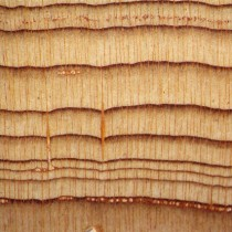 Tree ring study to establish date of Thera eruption