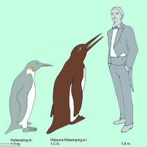 The oldest fossil giant penguin