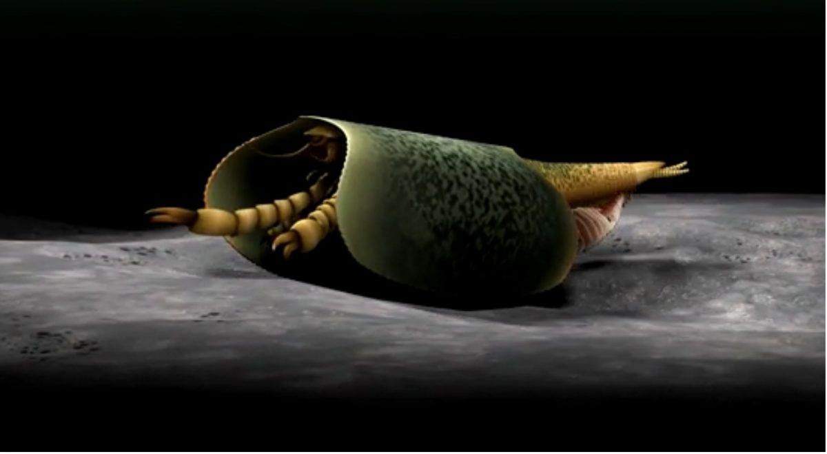 Snapshot of 3-D animation depicting Tokummia walking on the bottom of the seafloor. Credit: Image credit: 3D animation by Lars Fields. Copyright: Royal Ontario Museum
