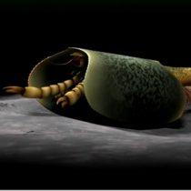 Νew 508-million-year-old sea creature with can opener-like pincers