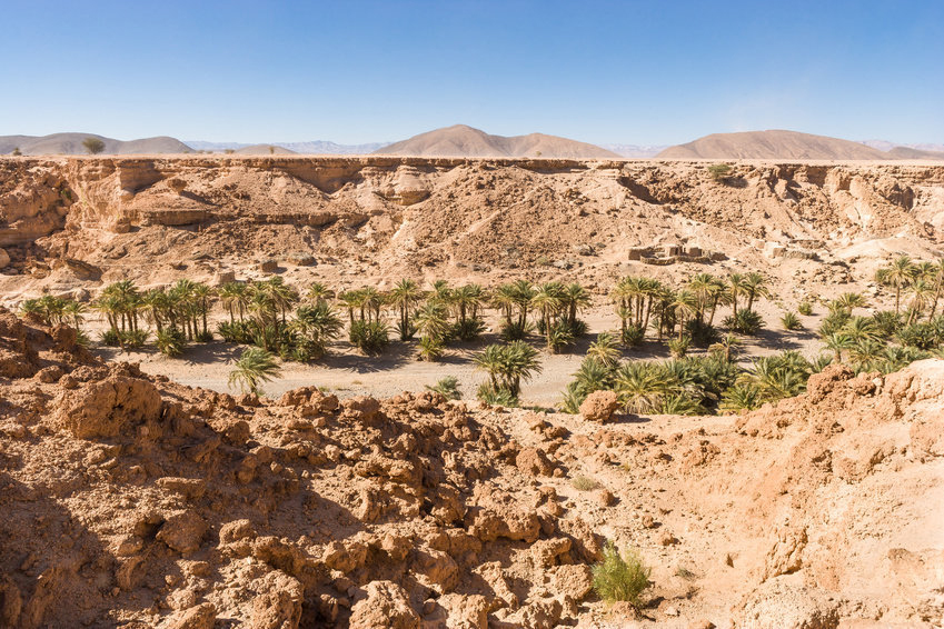 In a new study, the team argue that the springs acted as pit stops to allow early humans to survive as they moved across the African landscape.