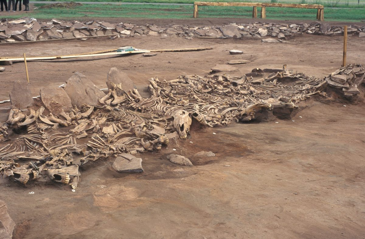 Scythian Kurgan Arzhan 2 (Tuva, Siberia), 7th century BC. Grave 16. View of the unearthed 14 horse skeletons. (Copyright: Michael Hochmuth, German Archaeological Institute, Berlin).