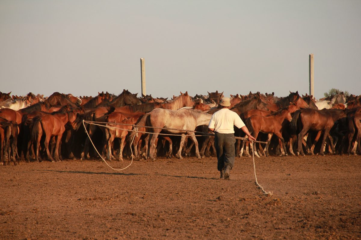 Kazakh horse breeder, catching horses, North Central Kazakhstan. (Copyright: Ludovic Orlando, Natural History Museum of Denmark & CNRS).