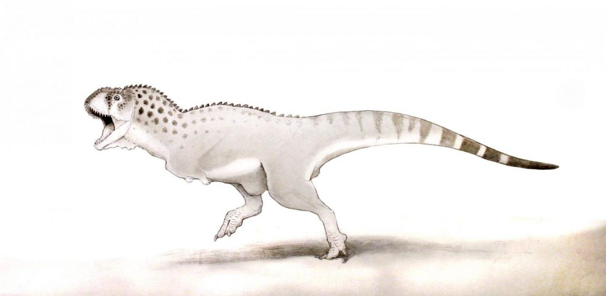 This is a Chenanisaurus barbaricus. Credit: Dr Nick Longrich, Milner Centre for Evolution, University of Bath