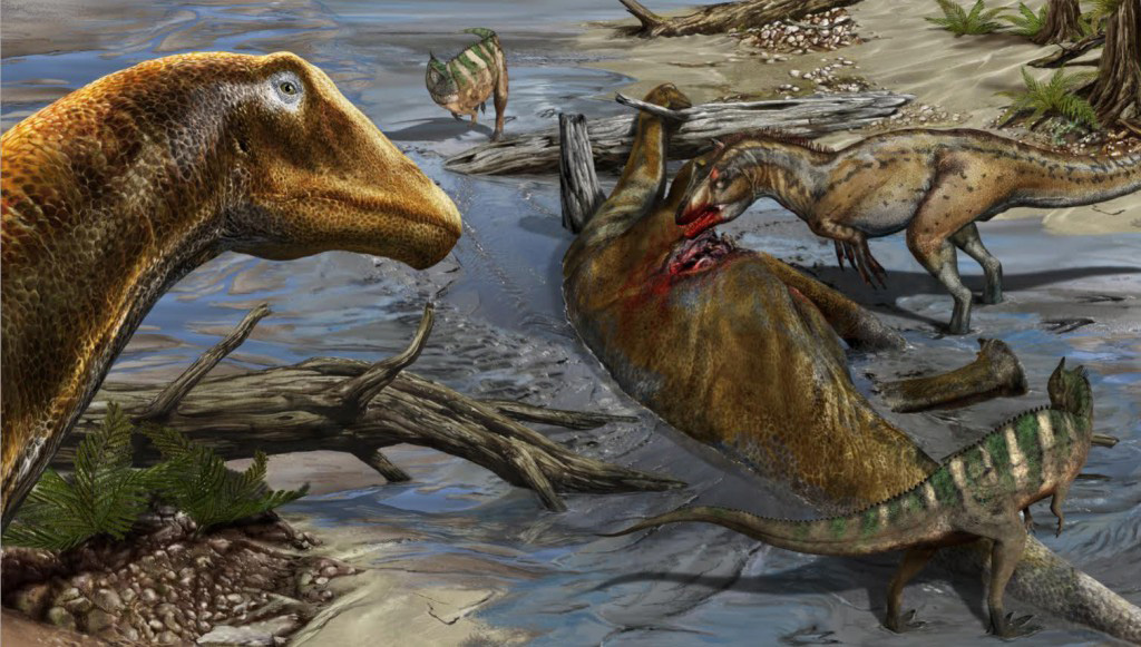 This is a Galeamopus Pabsti in its environment in the Late Jurassic of North America. An Allosaurus and two Ceratosaurus are feeding on a carcass of Galeamopus Pabsti. Credit: Davide Bonadonna