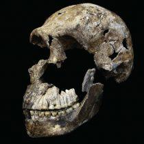 Young Homo naledi surprises