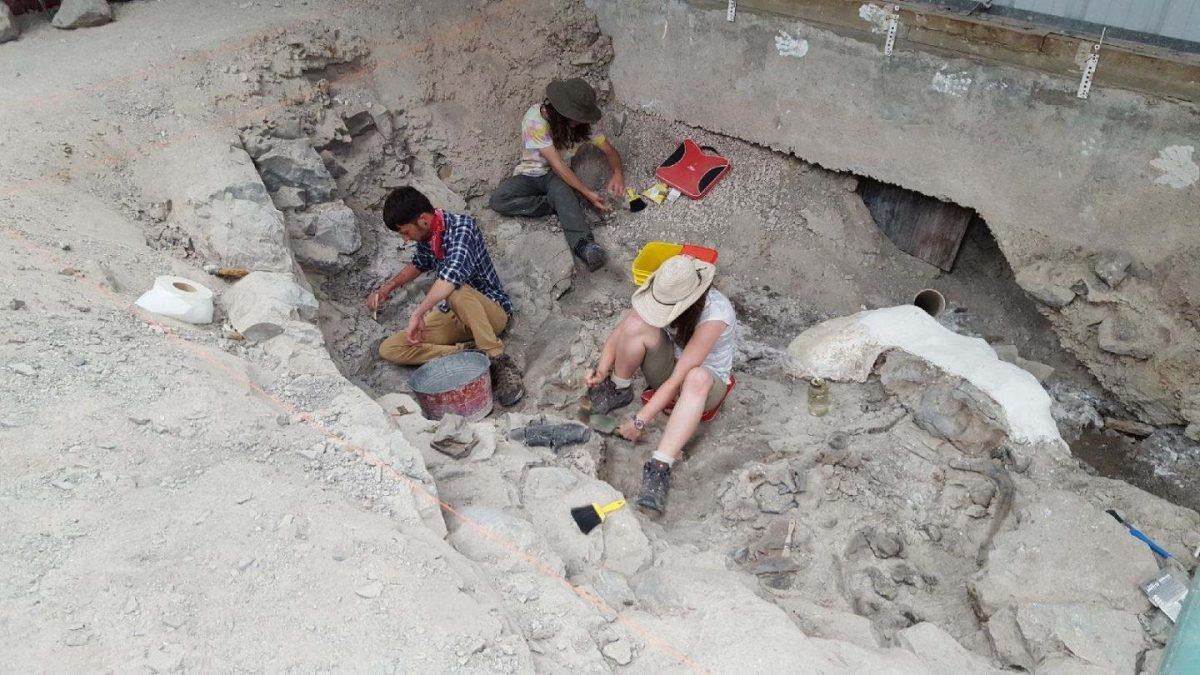 Indiana University of Pennsylvania students Josh Colastante, Alex Patch, and Heather Furlong excavate Allosaurus bones from the Cleveland-Lloyd Dinosaur Quarry.