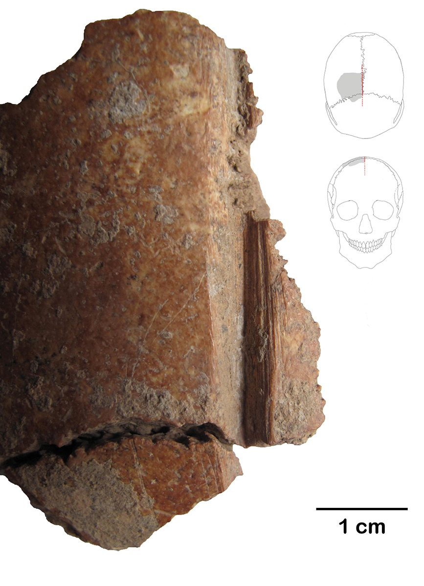 Fig. 2: Skull fragments with cut marks. (Image: Gresky, DAI)