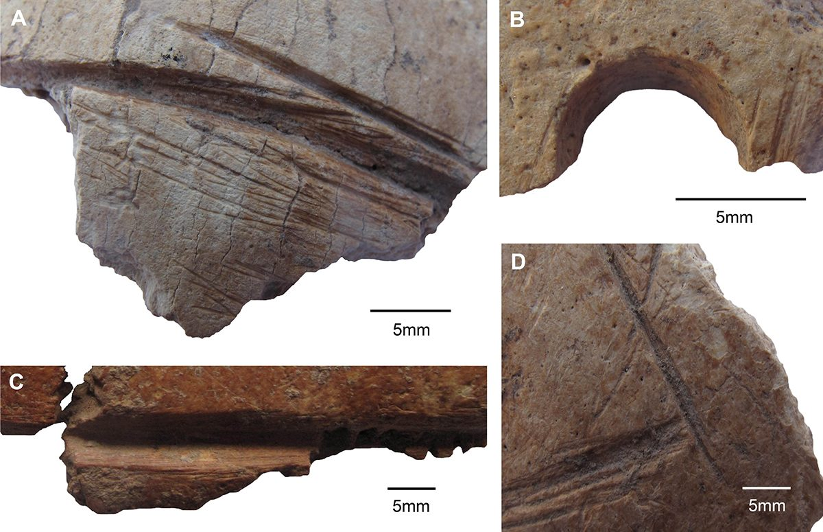 Fig. 3: Macroscopic details of artificial skull modifications. A, C, D: carvings, B: drilled perforation. (Image: Gresky, DAI)