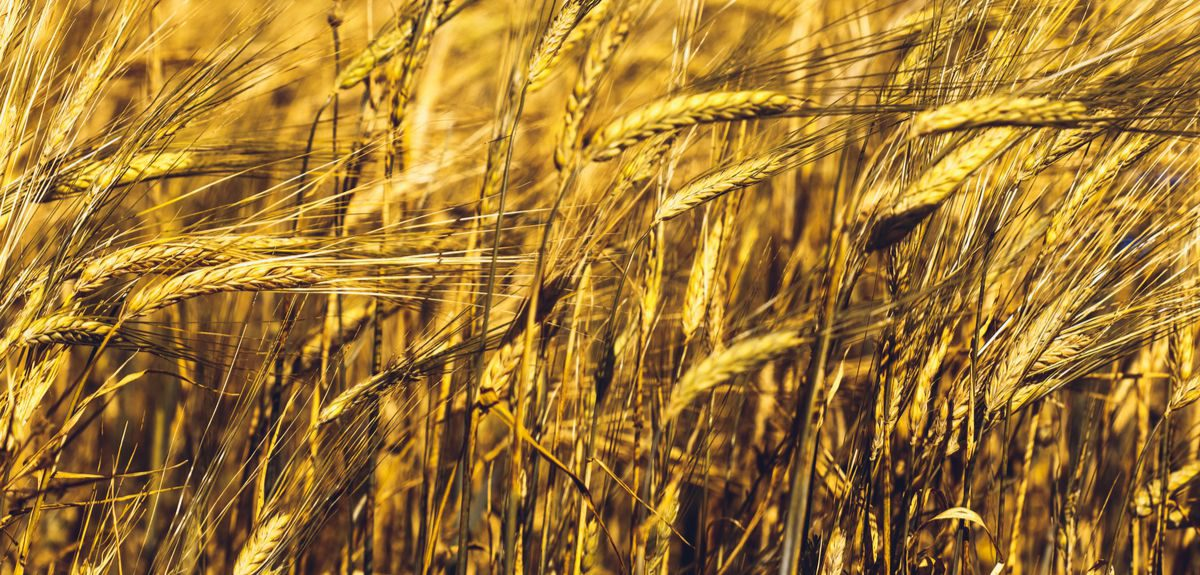 The researchers, led by a team from the University of Oxford, used stable carbon and nitrogen isotope analysis of charred ancient grains to reconstruct the conditions under which crops grew, building up a picture of how farming practice changed over time.