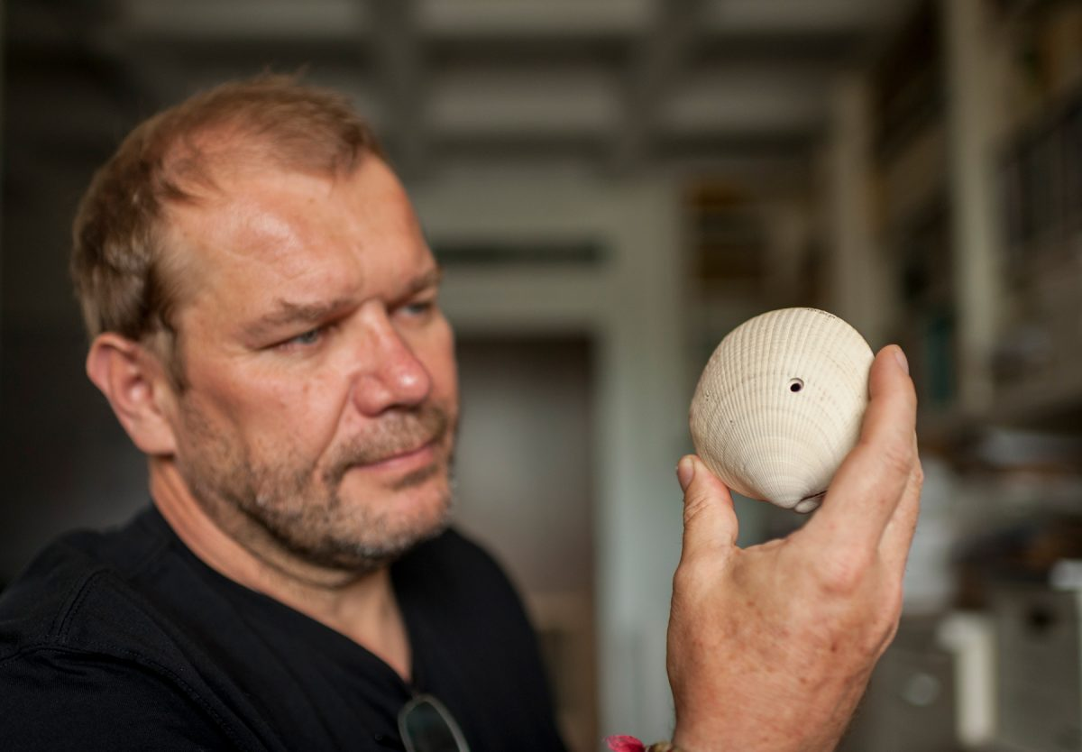 Michal Kowalewski, a researcher with the Florida Museum of Natural History at the University of Florida, holds an American bittersweet shell. The hole in the shell testifies to the mollusk's grisly end as a meal for a drilling predator. This fossil is about 2 million years old. (Photo by Kristen Grace, Florida Museum of Natural History).