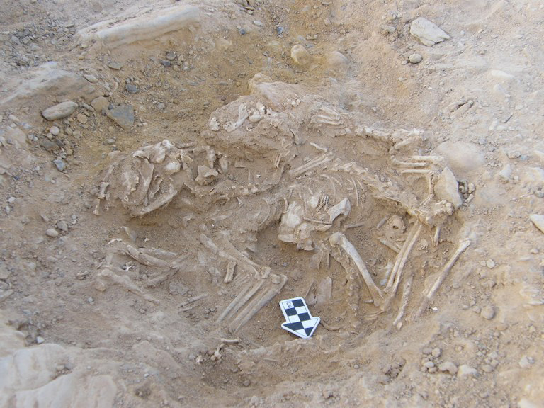Several cats buried in a 6000 year old pit in Hierakonpolis, Egypt (© Hierakonpolis Expedition)